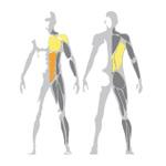 Ukážka svalov hornej časti tela