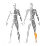 Lýtkové svaly