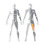 Ukážka precvičovaných svalov